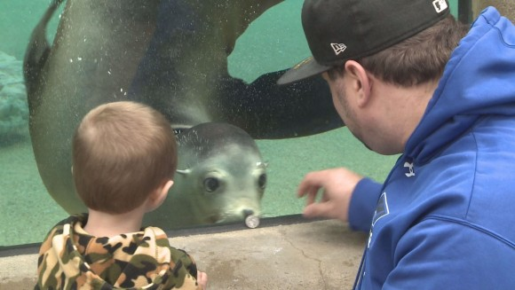 Meet Cassandra, the sea lion at the Fort Wayne Children's Zoo._186672