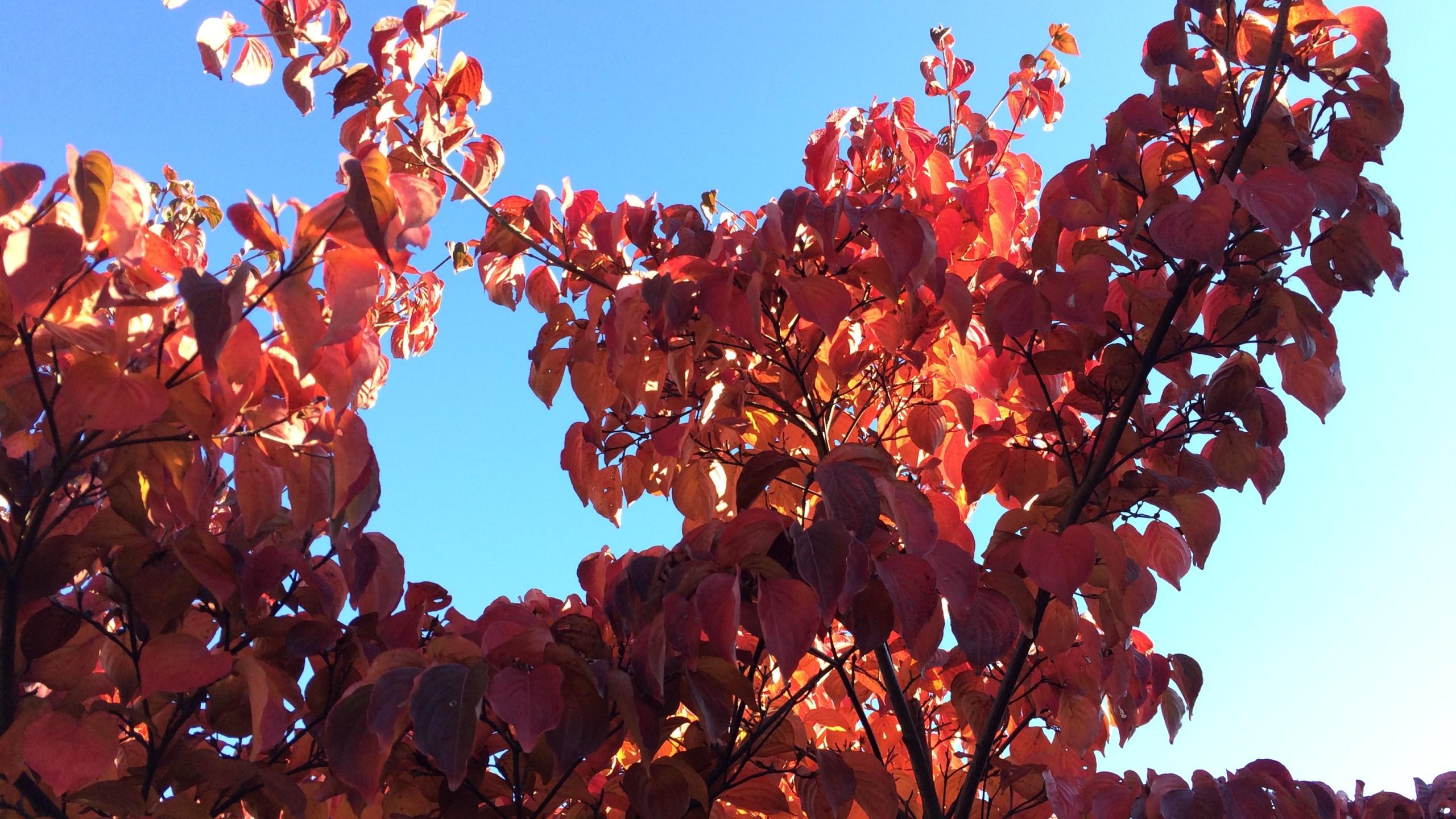 autumn fall leaves_218102