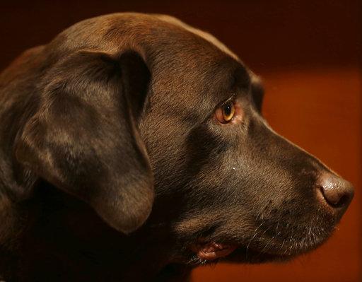 Dog Breeds_249230