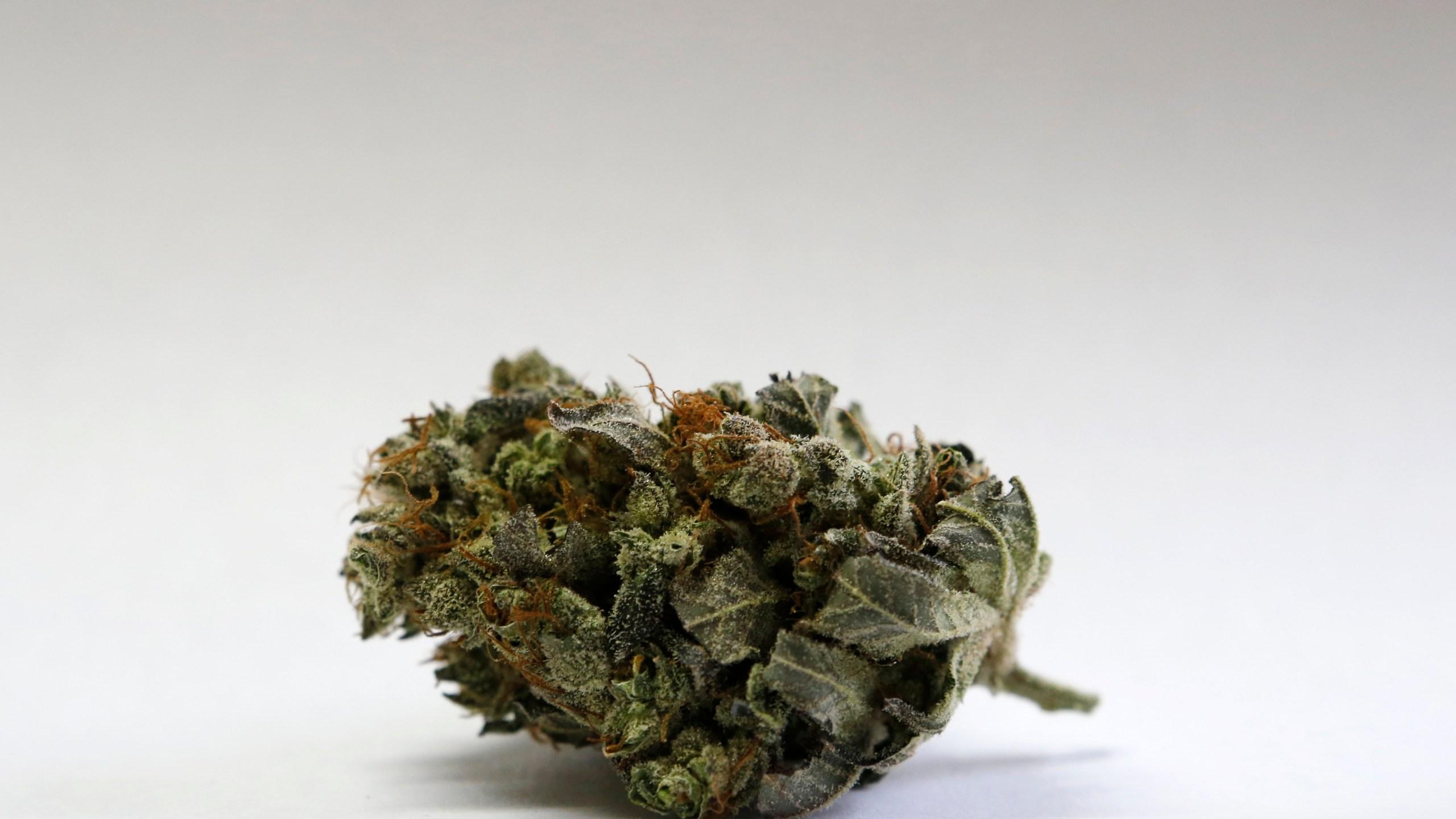 Campaign 2016 Marijuana Northeast Foothold_217130