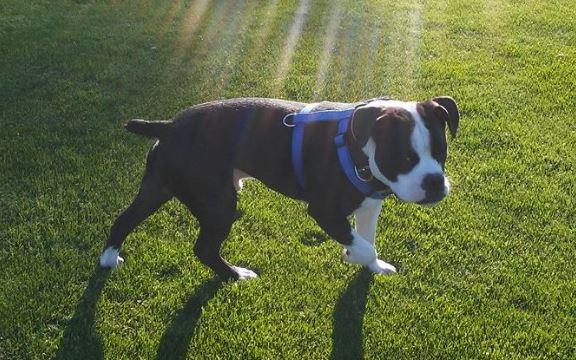 Craigslist Fort Wayne Pets - petfinder