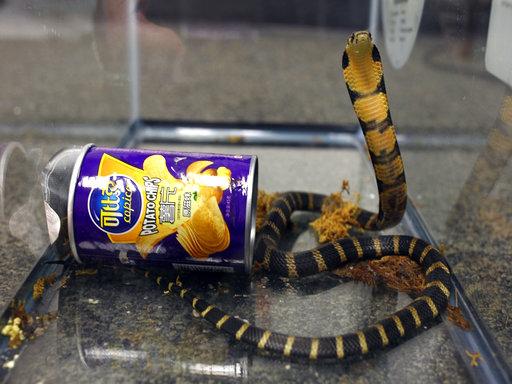 King Cobras Smuggling Arrest_272656