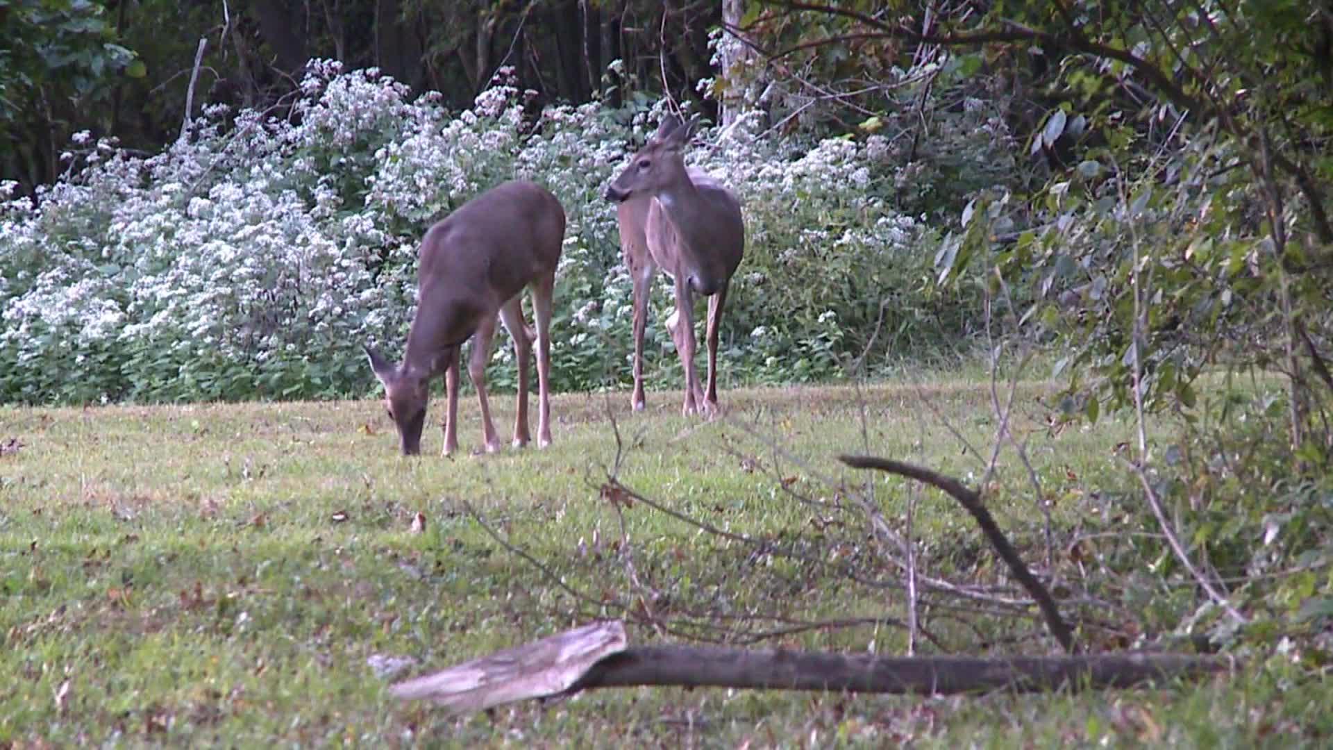 Deer file generic