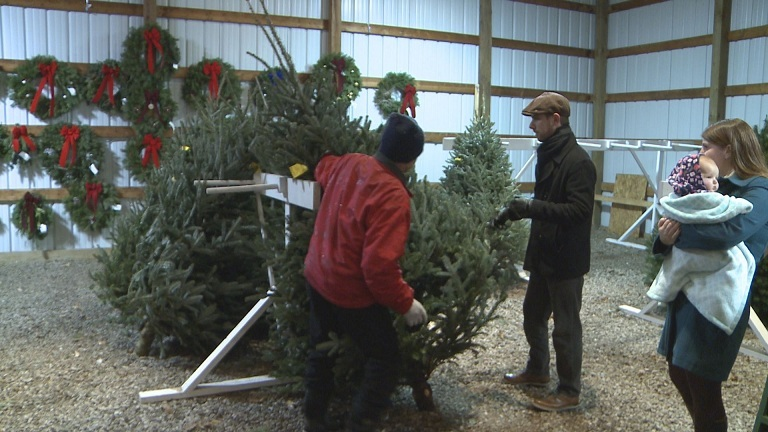 St. Joe Christmas Tree Farm_225355
