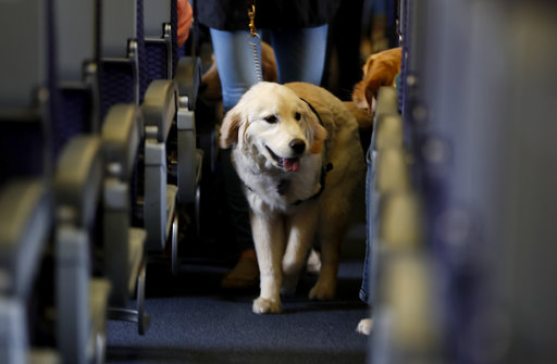 Animals on Planes_308256