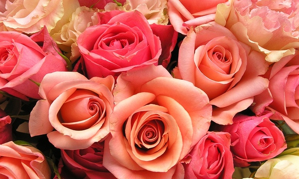 roses-flowers-valentines-day_1517879321399_340223_ver1-0_33247436_ver1-0_640_360_311880