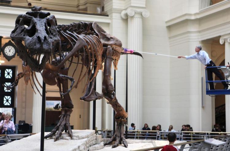 Sue Rex Field Museum Chicago_311799