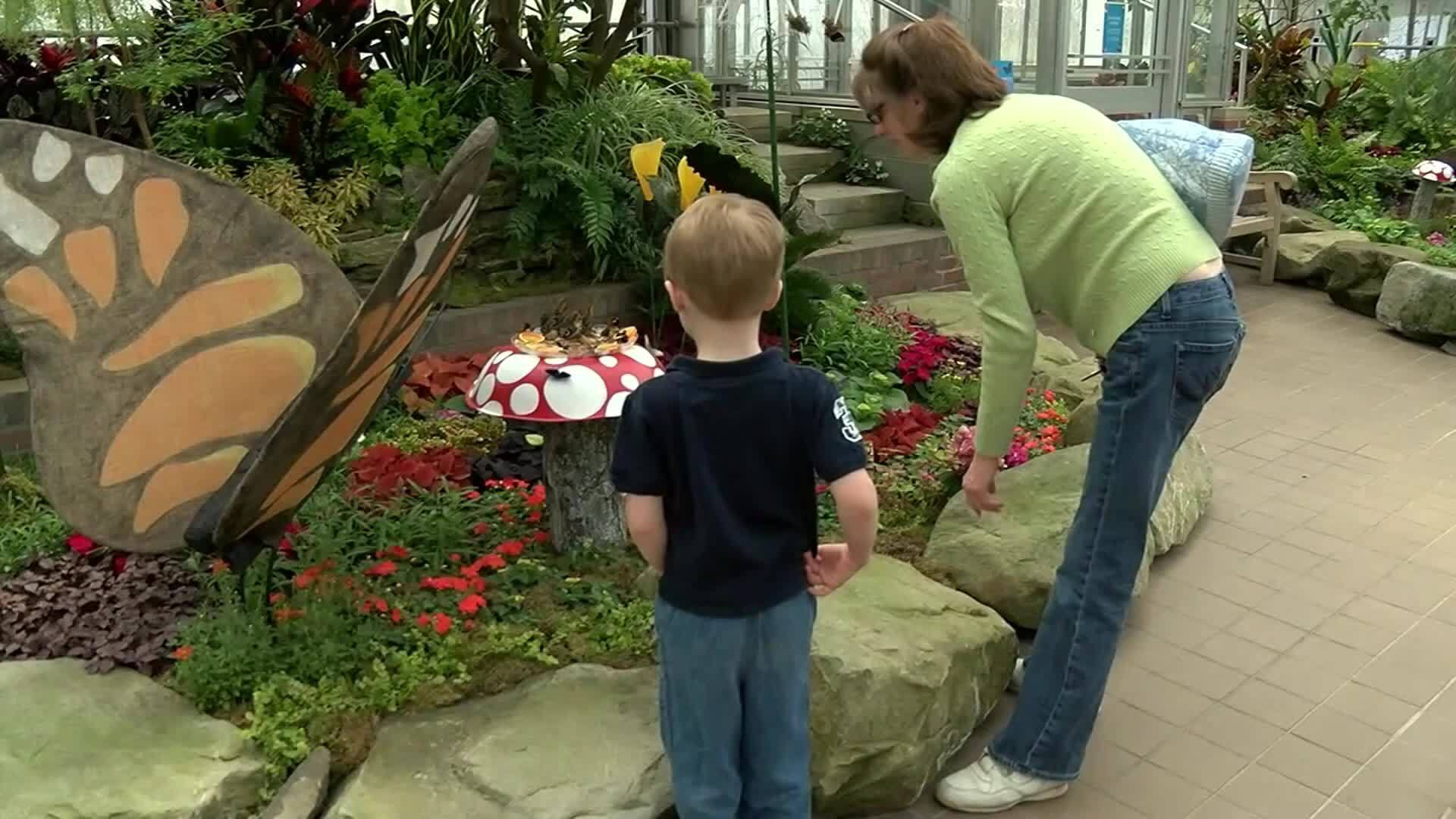 Blue Morpho Butterfly Stolen from Ohio Conservatory