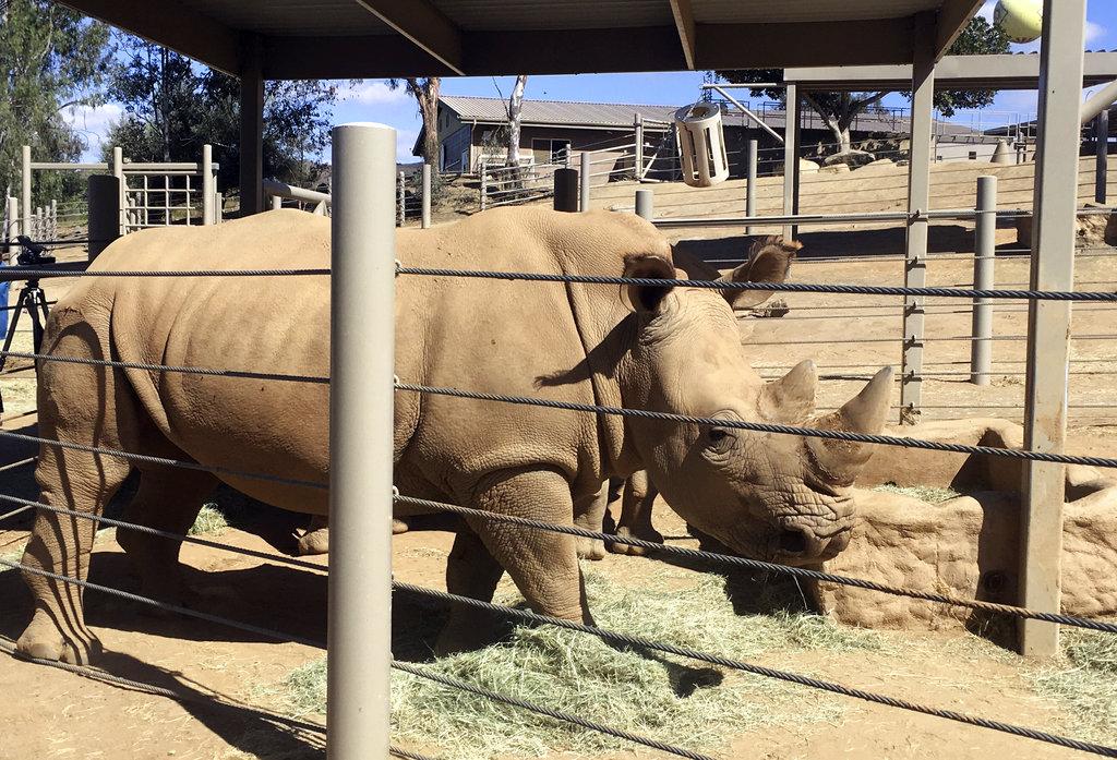 Rhino Surrogate Mothers