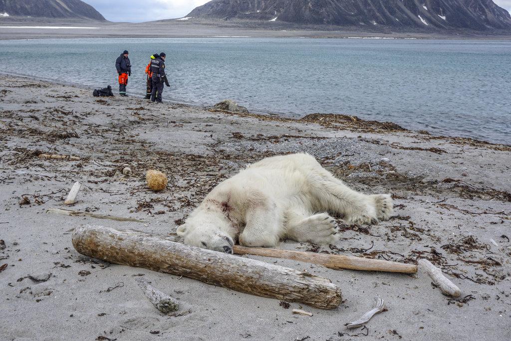 Norway-Polar Bear Attack_1532817610929
