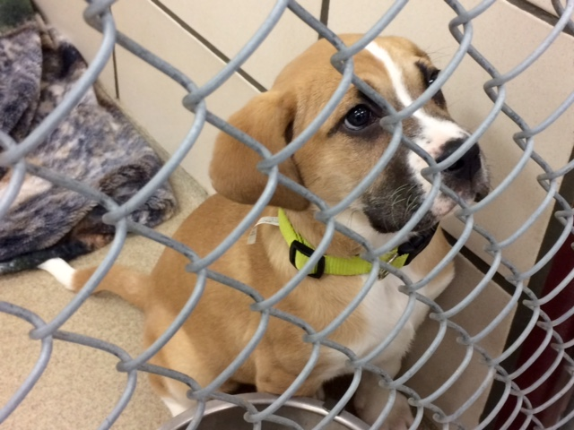 Fort Wayne animal care and control_237549