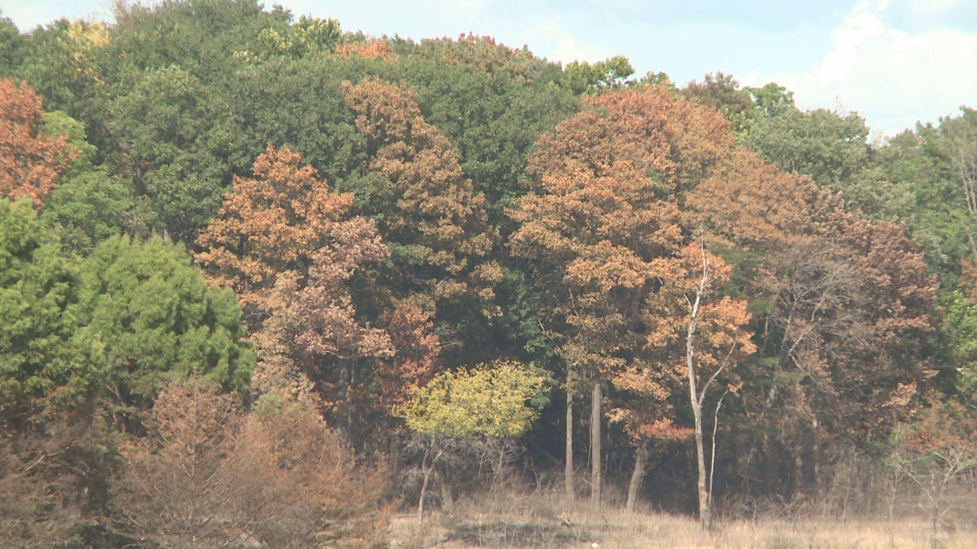 salamonie trees_129047