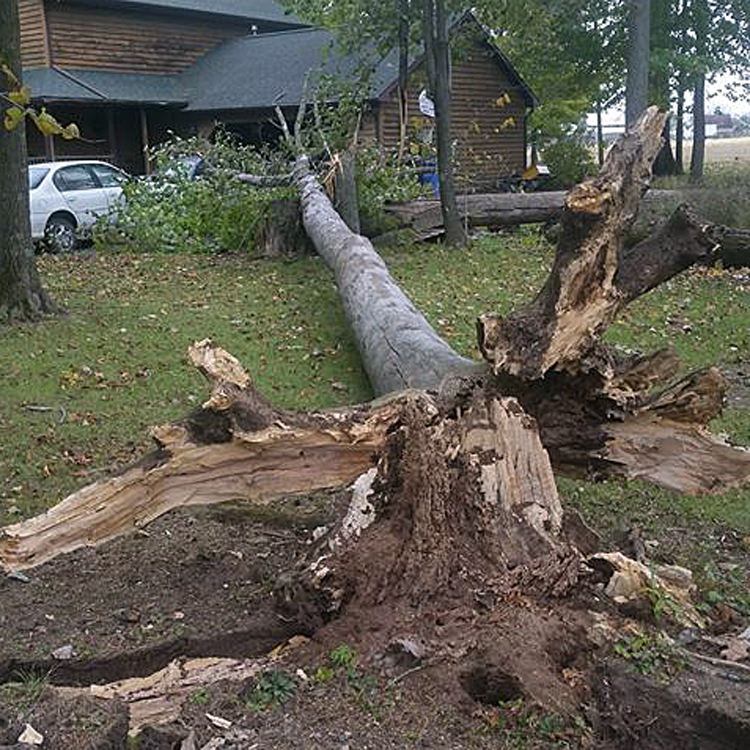 wind damage_1540221456403.jpg.jpg
