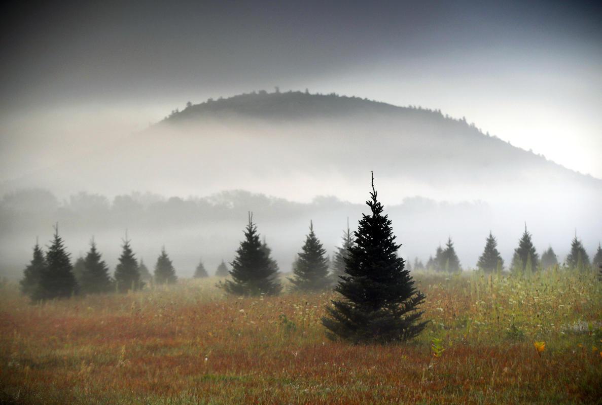 Amazon Christmas Trees_1542813768099