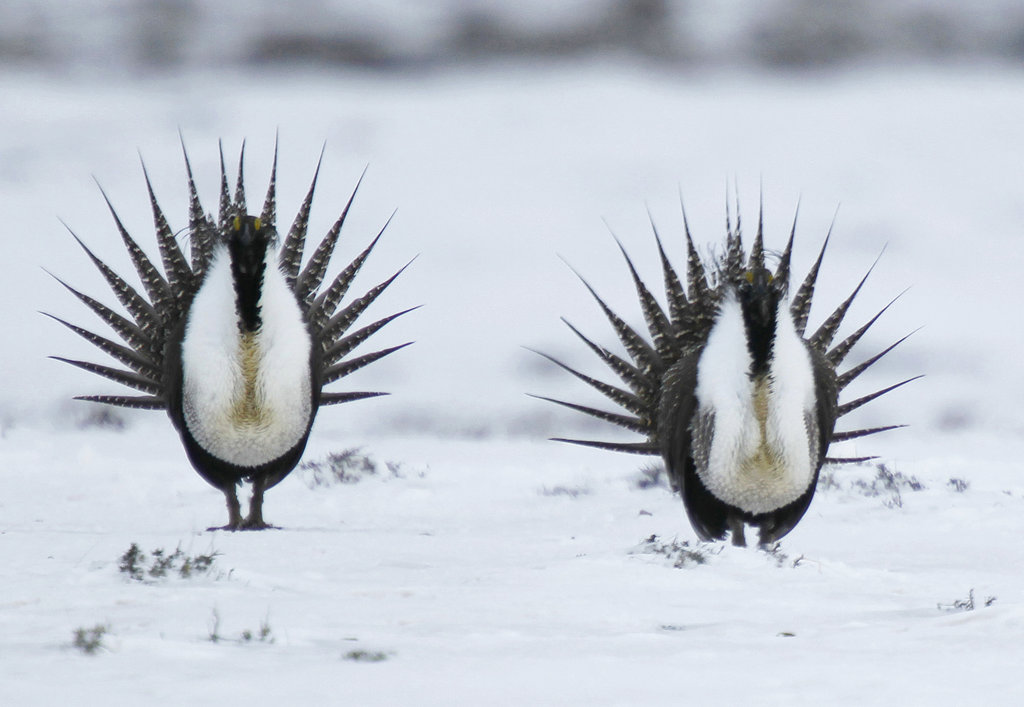 Sage Grouse Energy Leases_1544151339227