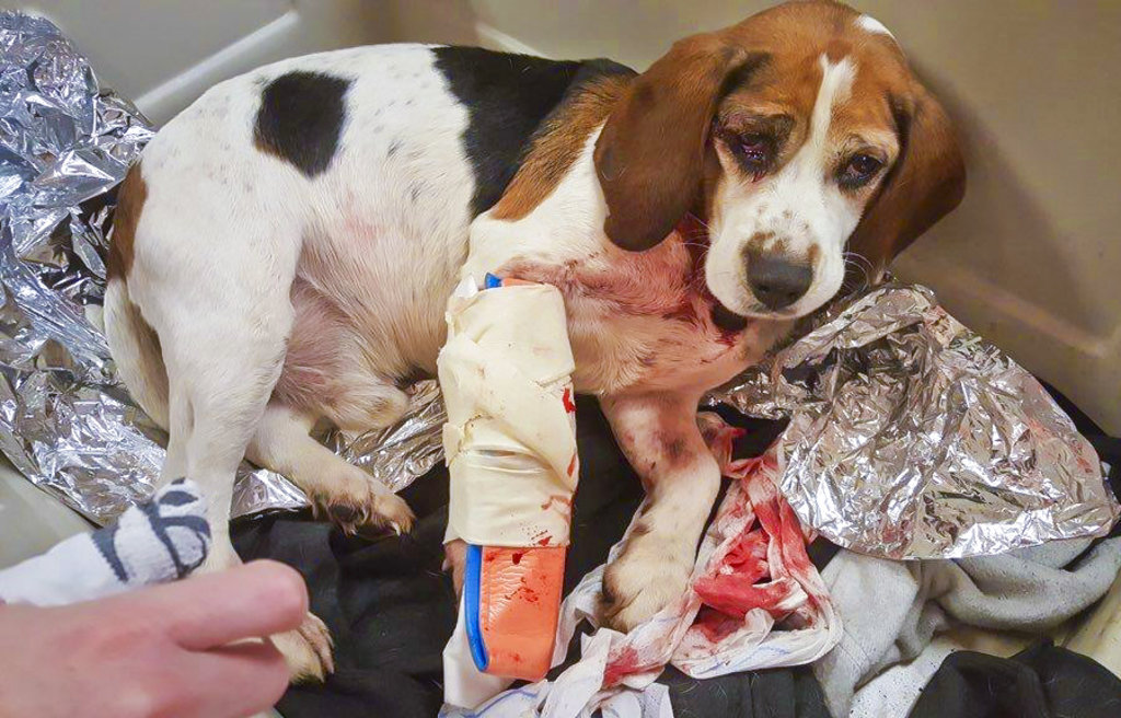 Dogs Thrown From Vehicle_1544924191475