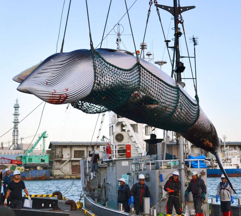 Japan Whaling_1545801251355