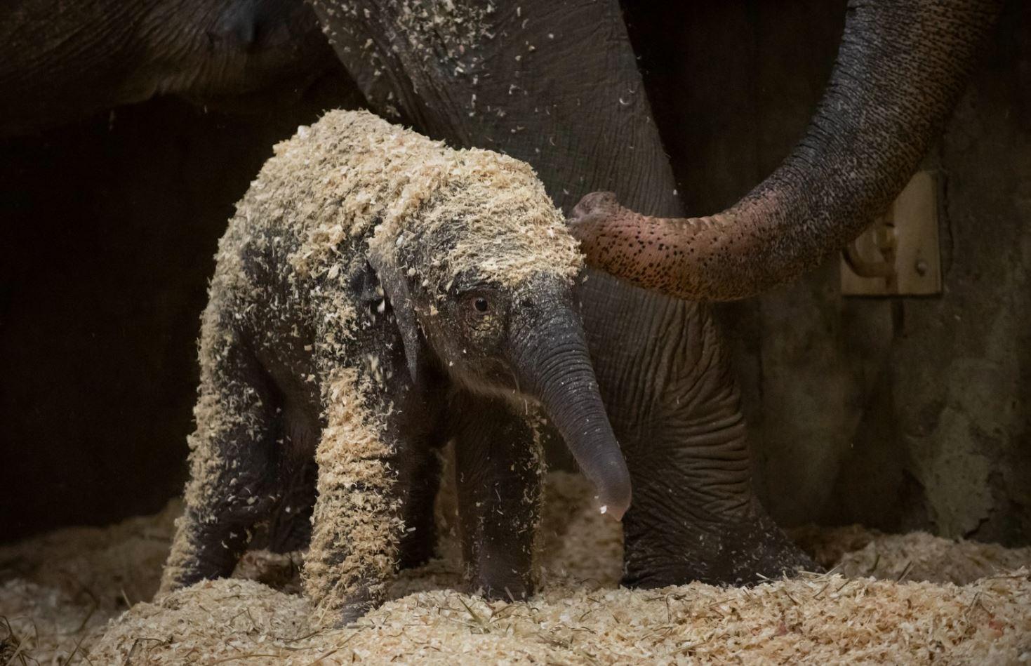 Columbus Zoo elephant baby_1544197939949.JPG.jpg