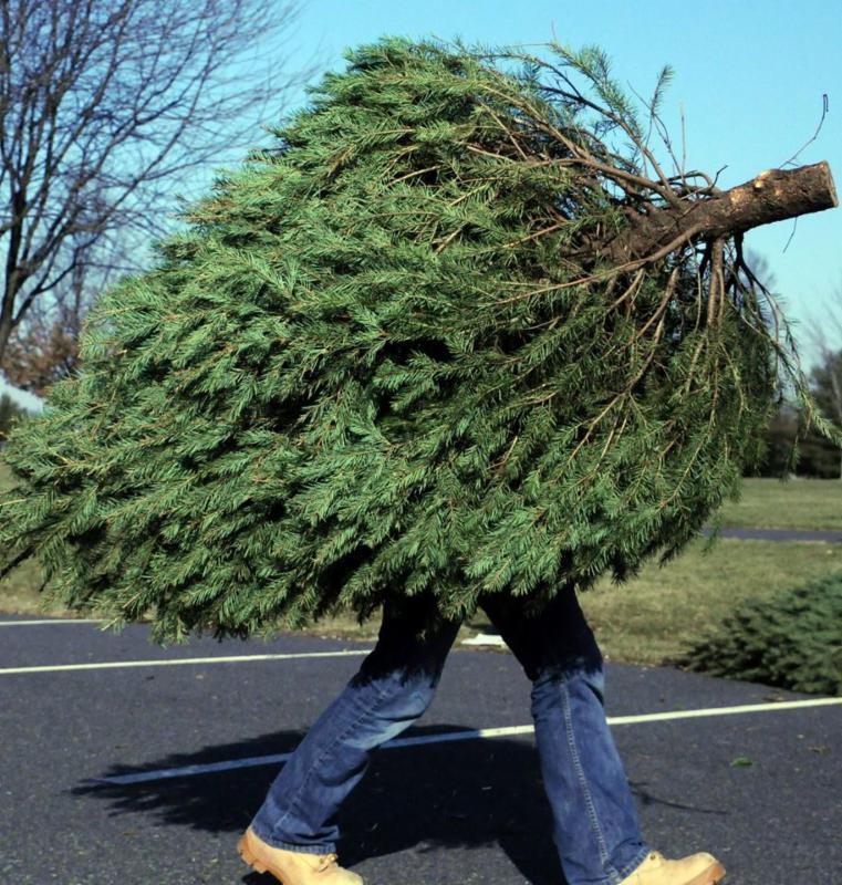 Christmas Tree_155438
