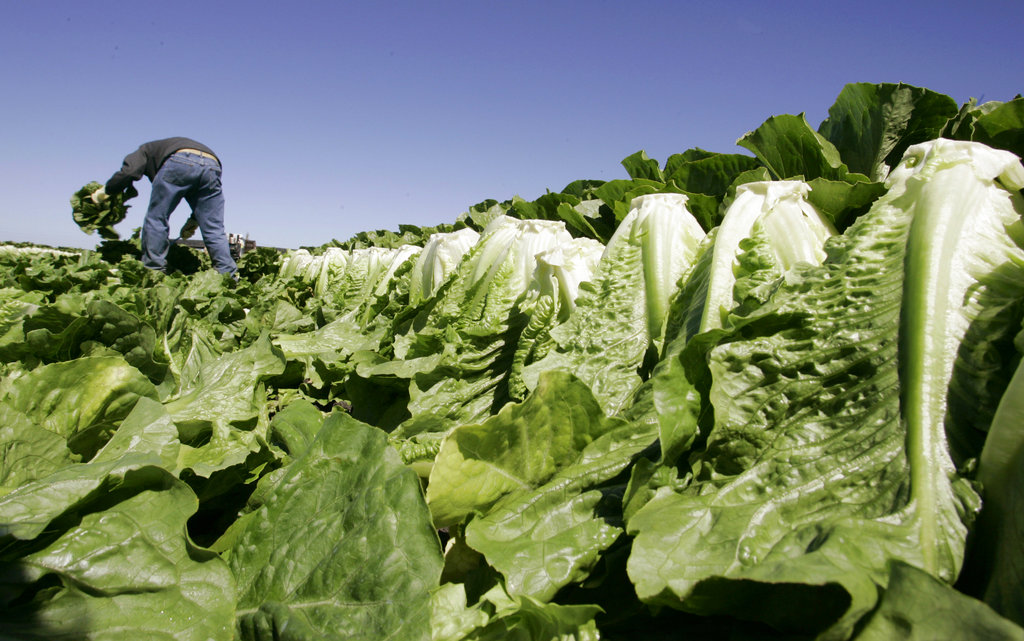 Lettuce Outbreak_1547073171204