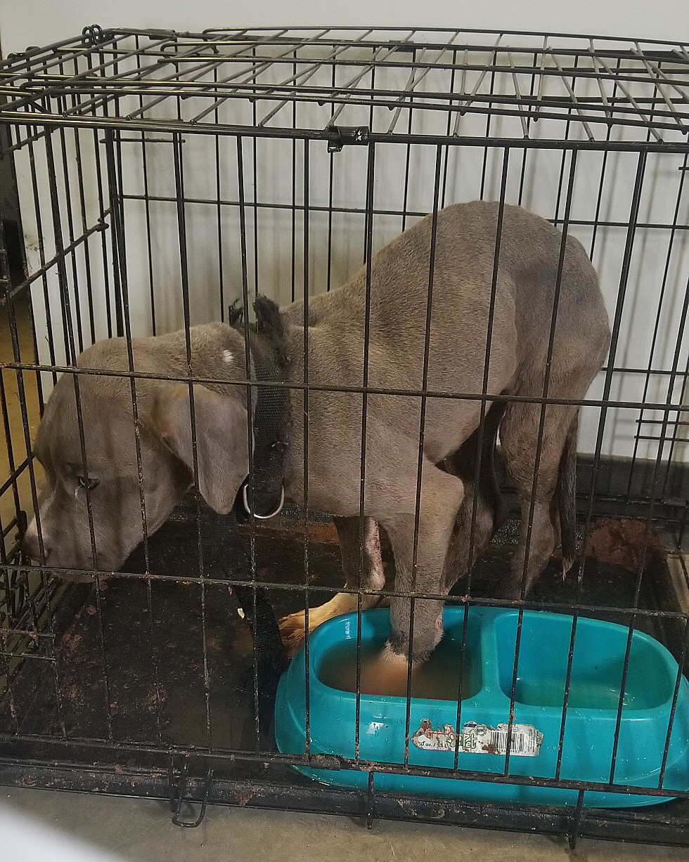 Caged dog_1555420613136.jpg.jpg