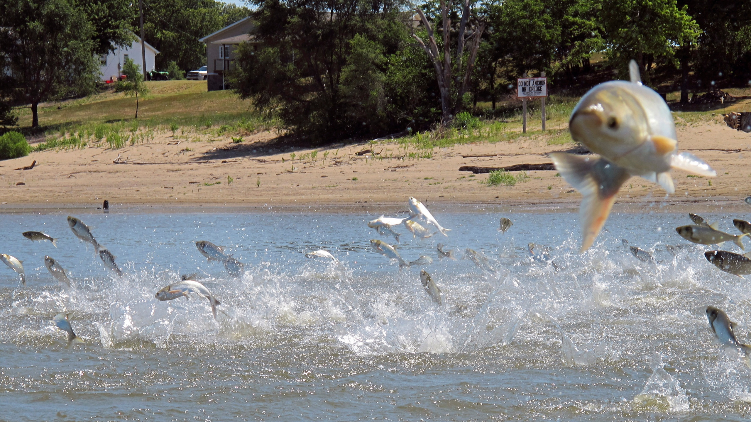 Asian Carp Great Lakes_1558732838924