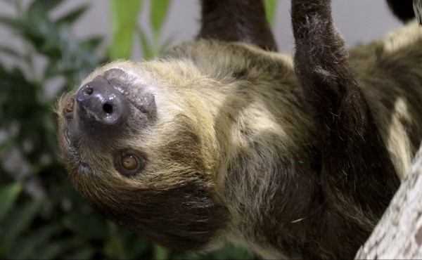 Sloths and snakes at the Indianapolis Zoo