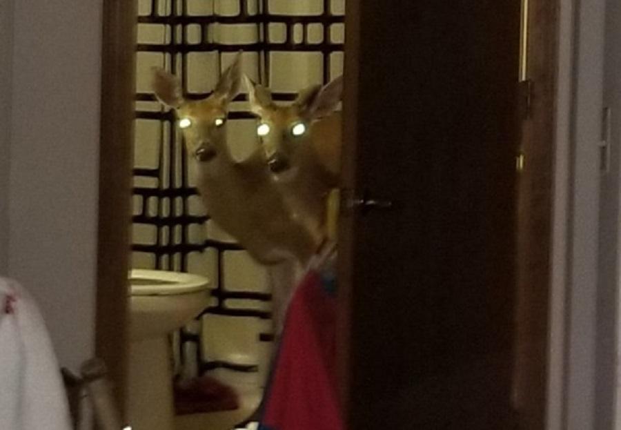Decatur Deer 1