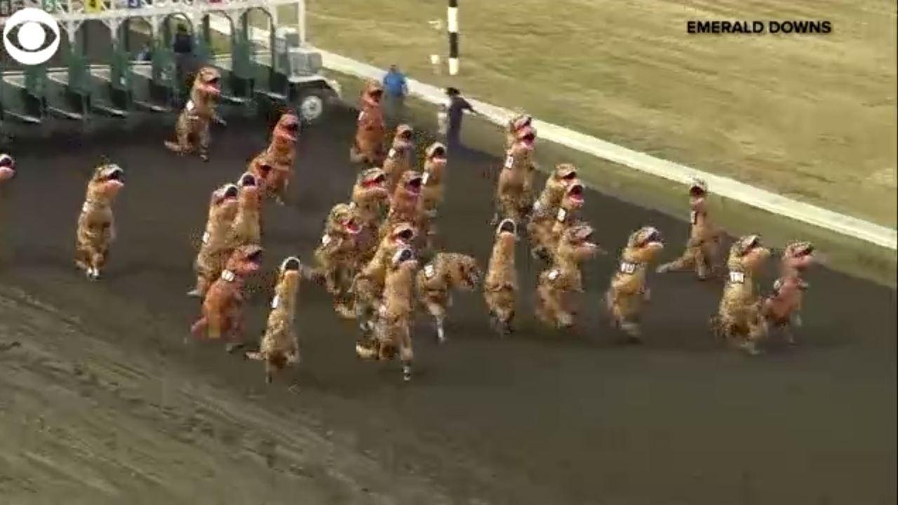 A T Rex Race It Happened Wane