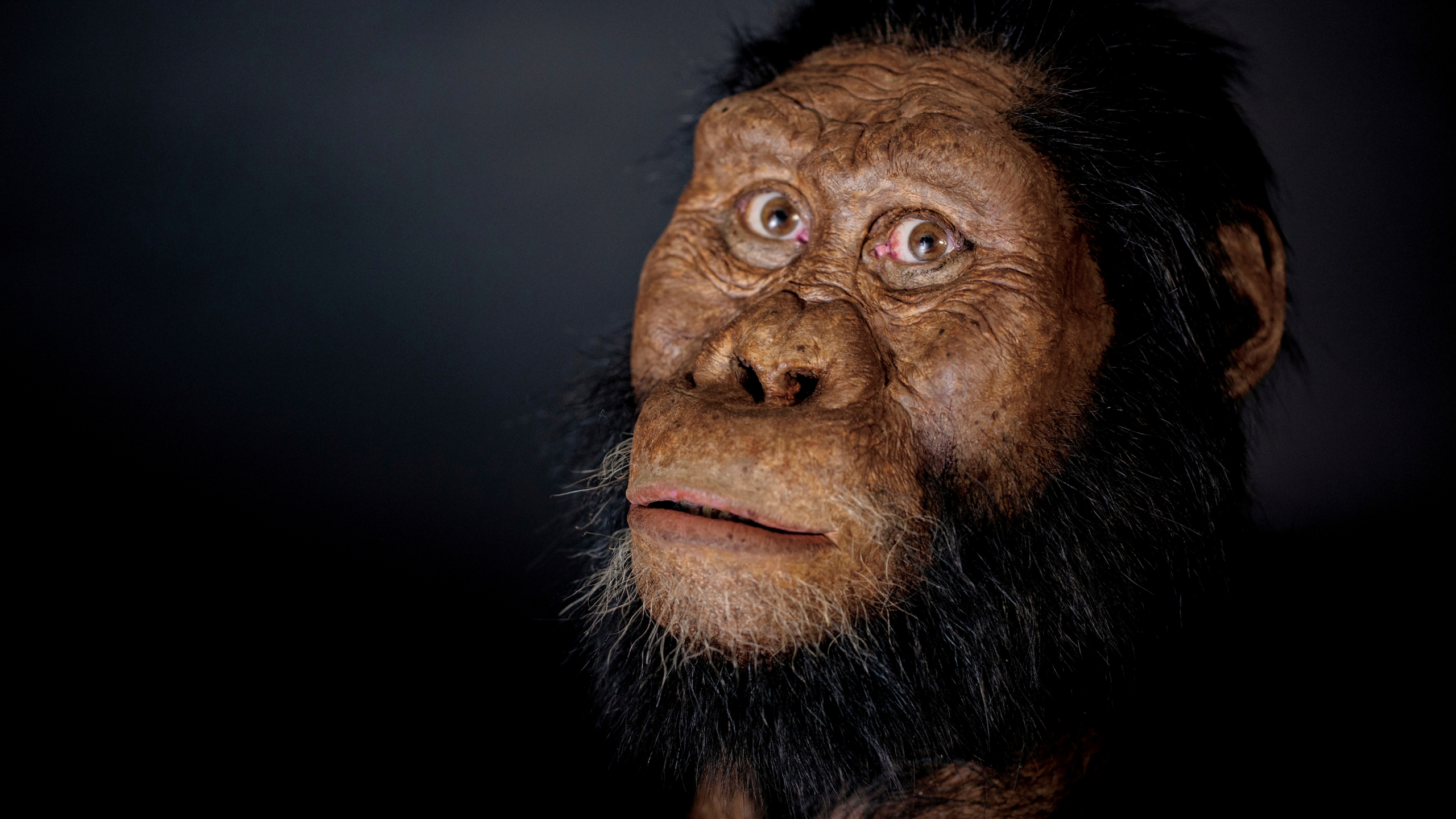Ethiopian fossil reveals face for ancestor of famed 'Lucy